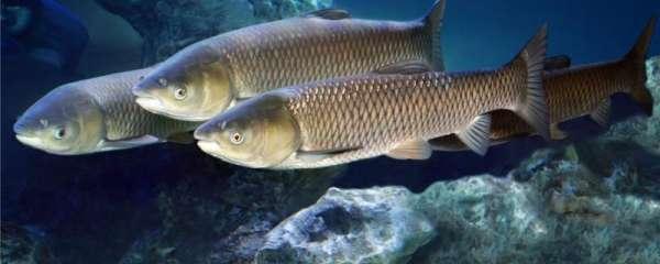 一亩鱼塘可以混养多少鱼,鱼塘混养有什么好处
