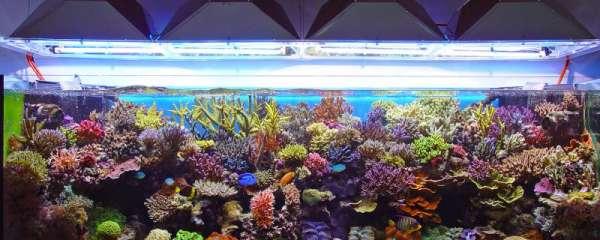 热带鱼鱼缸温度多少合适,低温有什么影响