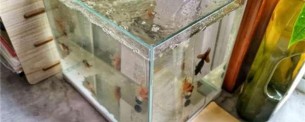 鱼缸只有过滤没有增氧可以吗,增氧有什么好处