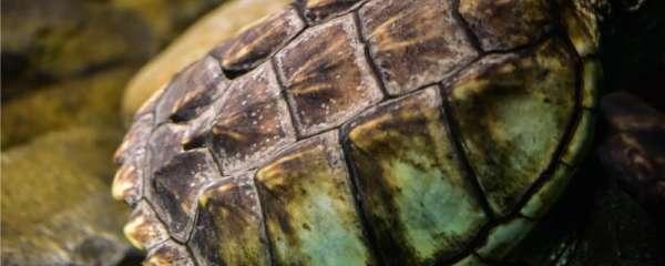 养龟需要加热棒吗,低温对龟有什么影响