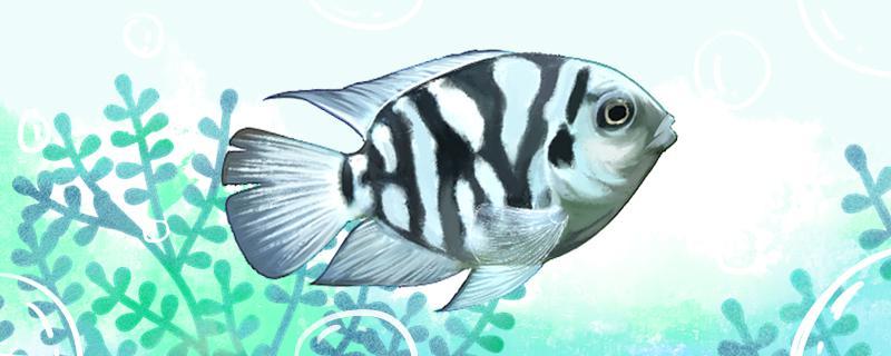 一米的鱼缸建议养什么鱼,什么鱼容易养