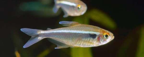 鱼苗放塘后用什么消毒,消毒有几种方式