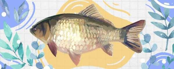 冬天钓鲫鱼用什么味型饵料,用什么小药