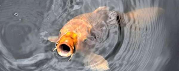 冬季钓鲤鱼怎样选择钓位,怎样调漂