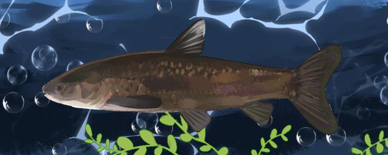 冬季钓青鱼气温10℃可以钓吗,气温多少合适