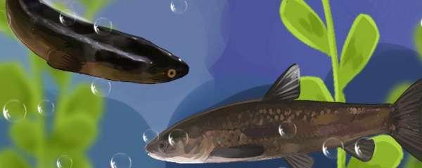 新挖鱼塘用什么消毒最好,消毒剂有哪些