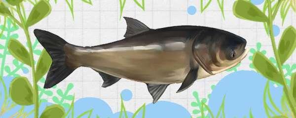 新挖的鱼塘怎么做防水,鱼塘漏水怎么办