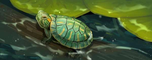 巴西龟有哪些品种,和乌龟有什么关系