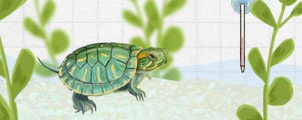 巴西龟适合的温度,适合的水位