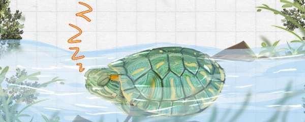巴西龟睡觉是什么样子,什么时候睡觉