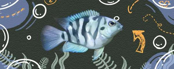 迷你鹦鹉鱼能和什么鱼混养,混养时需要注意什么