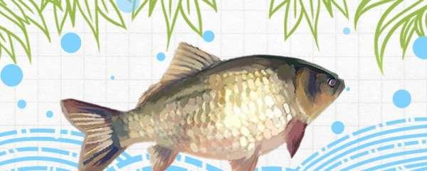 初春钓鲫鱼用什么鱼漂,怎么调漂
