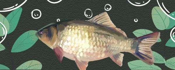 鲫鱼喜欢在什么地方活动,哪里容易钓到鲫鱼