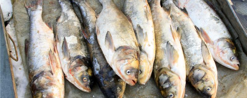 冬天3到5度能钓鲢鱼吗,怎么钓鲢鱼