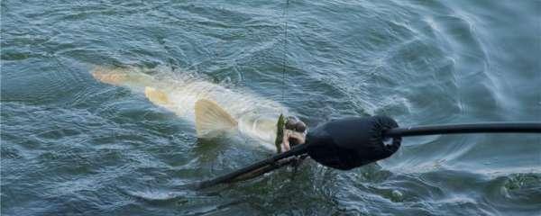 三月份钓鲤鱼用什么饵,用什么竿