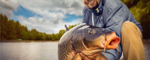 三月份可以夜钓鲤鱼吗,用什么鱼饵钓