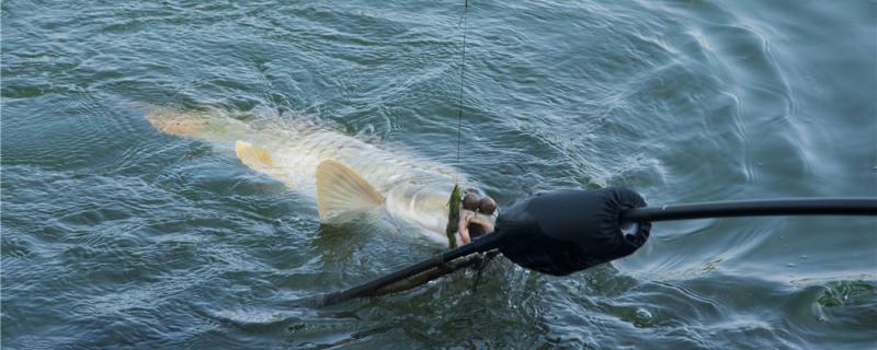 四月钓鲤鱼用什么饵料,用什么窝料