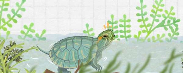 巴西龟会咬草龟吗,它们能一起养吗