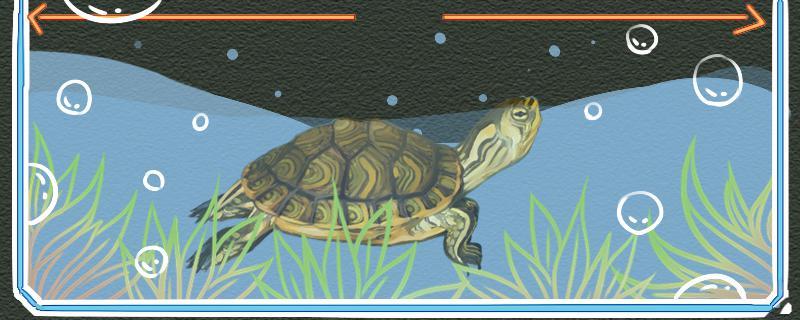 黄耳龟可以深水养吗,水位多少合适