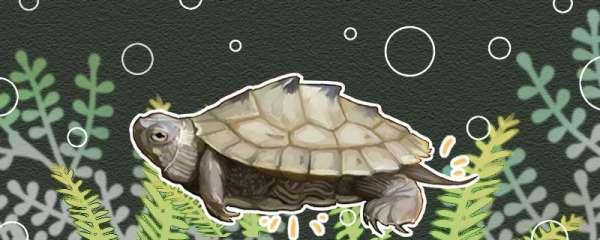 地图龟冬眠吗,冬眠时间