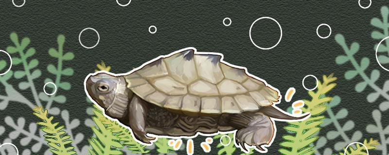 地图龟要冬眠吗,冬眠时间是多久