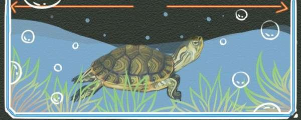 黄耳龟怎么发色,吃什么有助于发色