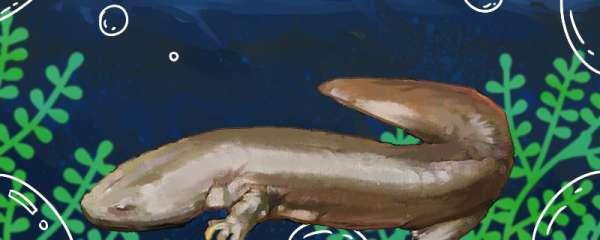 娃娃鱼是爬行动物吗,能生活在陆地上吗