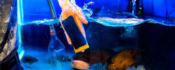 鱼缸水一天就混浊怎么办,水混浊有哪些原因