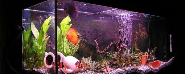 鱼缸水乳白色快速解决,为什么水会发白