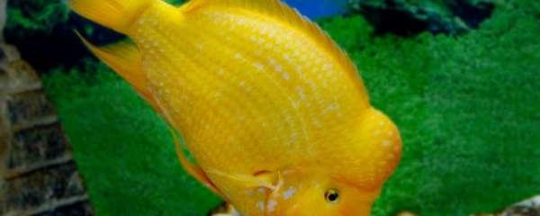 鹦鹉鱼喜欢水流快还是水流慢,用什么样的过滤装置好