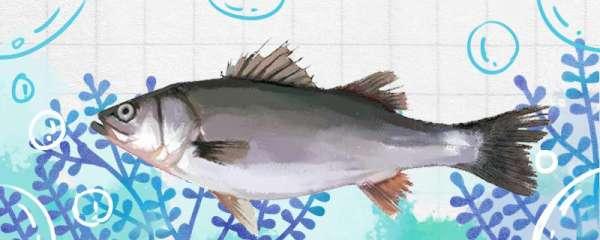手竿如何钓鲈鱼,用什么饵料钓鲈鱼
