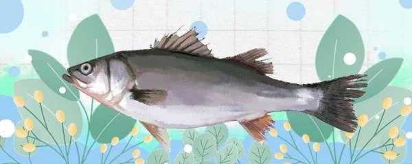 钓淡水鲈鱼用什么饵,用什么窝料