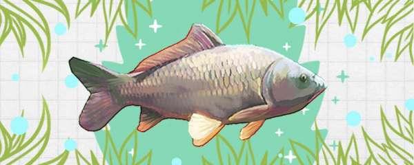 黑坑钓鲤鱼用什么钩子比较好,用什么鱼线好