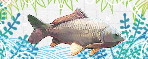 黑坑钓鲤鱼用几号钩最好,用几号鱼线最好
