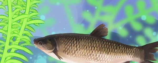 黑坑钓草鱼选什么漂,调漂的正确方法是什么