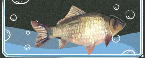 黑坑钓鲫鱼用吃铅多大的浮漂,怎么调漂