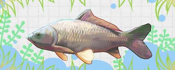 春天钓鲤鱼用什么窝料最好,提前多久打窝最好