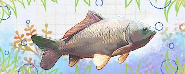 四月鲤鱼喜欢什么味型饵料,用什么鱼竿钓效果好
