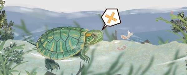 巴西龟能一直泡在水里吗,什么水位饲养合适