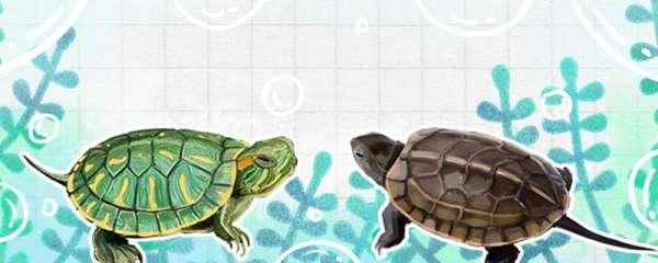 草龟能和巴西龟一起养吗,能和什么龟一起养