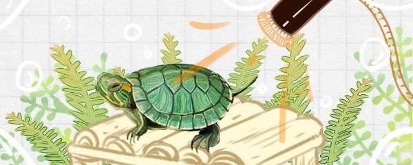 巴西龟身上有白色絮状物是什么原因,怎么治疗