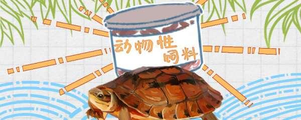 金钱龟为什么不吃东西,怎么办