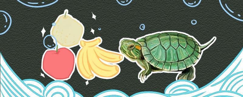幼年巴西龟吃什么,吃食要注意什么