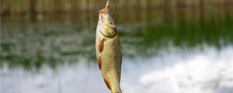 冬季钓鲫鱼需要打窝吗,提前多久打窝
