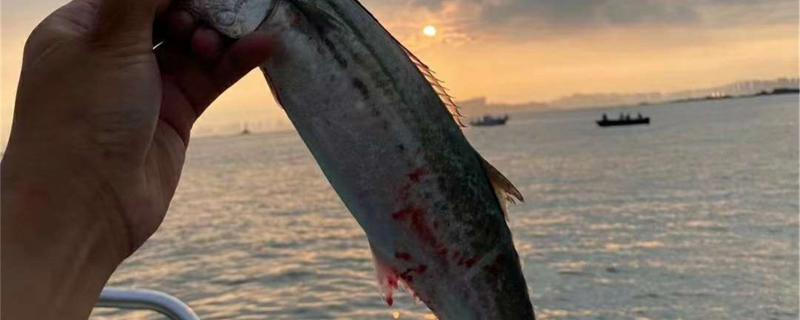 冬天可以钓鲈鱼吗,怎么钓