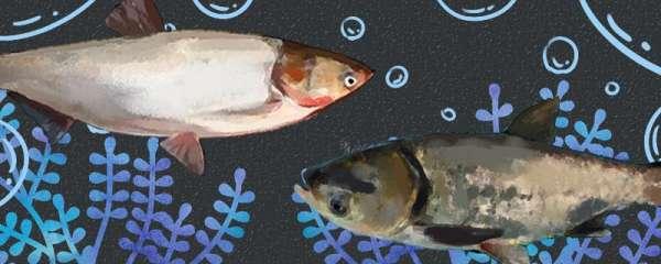 河水适合养什么鱼,哪些鱼比较好养