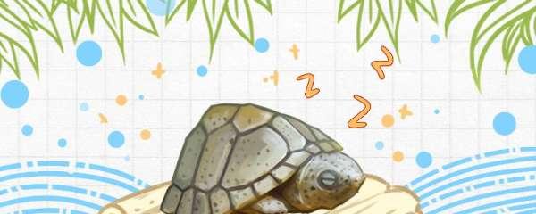 剃刀龟要冬眠吗,冬眠需要注意什么