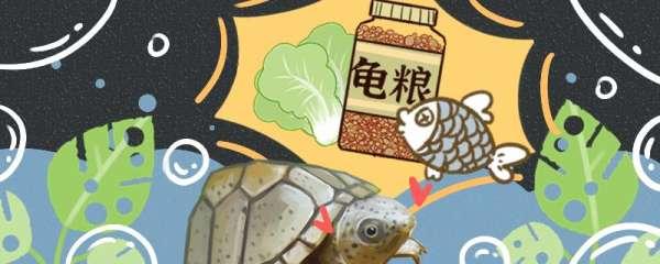剃刀龟一天吃多少,怎么喂合适