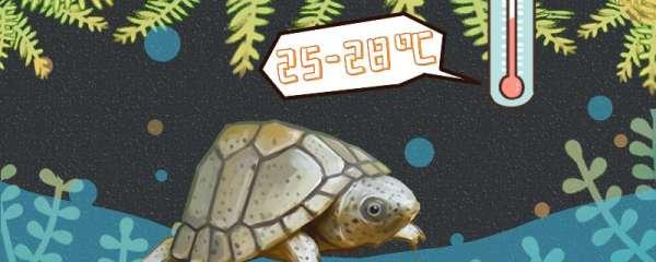 剃刀龟可以冷水养吗,水温多少合适