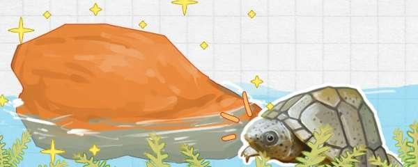 剃刀龟不下水怎么办,用什么水养好
